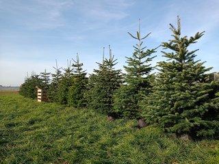 Kerstbomen Nordmann