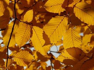 Plantes à feuilles caduques