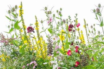 Bio bloemenmengsels