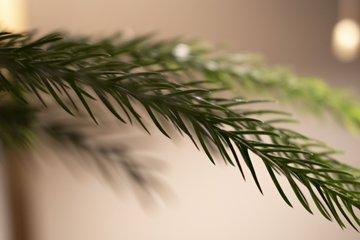 Kerstbomen tot 100 cm