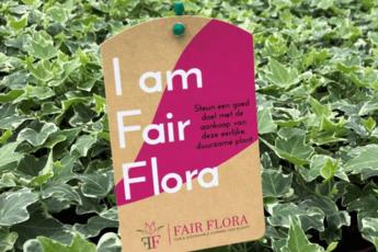 Duurzame kamerplanten 'FAIR FLORA'