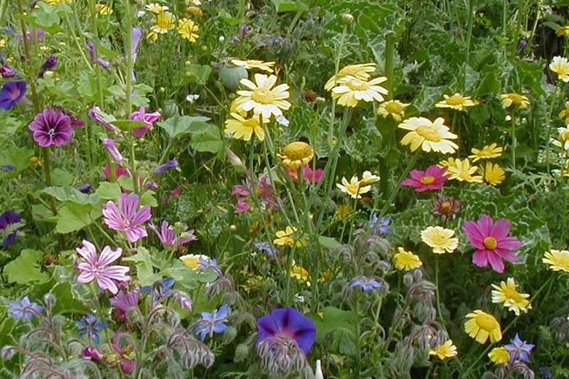 Biologische groentezaden, kruidenzaden & bloemenzaden