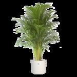 Goudpalm in witte ® ELHO pot 'Areca Dypsis' 125 cm