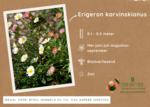1 m² natuur - hoge border all-in-one natuurpakket 6