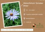 Symphyotrichum oblongifolium 'October Skies' - Aster