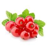 Ribes rubr. 'Jonkheer van Tets' - Rode aalbes - Bio fruitplant