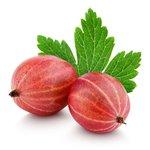 Ribes u.-c. 'Captivator' - Rode kruisbes - BIO fruitplant