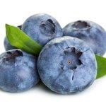 Vaccinium cor. 'Sunshine Blue' - Bosbes - BIO fruitplant