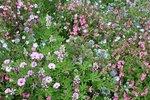 Bloemenmengsel, laag - bio bloemenzaden