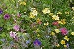 Bloemenmengsel, hoog - bio bloemenzaden