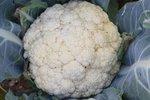 Bloemkool 'Flora Blanca' – Brassica oleracea - Bio groentezaden
