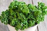 Boerenkool 'Westlandse Winter' – Brassica oleracea - Bio groentezaden