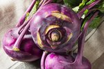 Koolrabi 'Delikatess Blauwe' – Brassica oleracea - Bio groentezaden