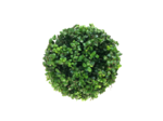Ilex crenata Dark green® bolvorm 75/80 cm 'Japanse hulst'