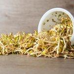 Taugé - sojascheuten - Bio kiemgroenten