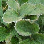 Roofmijten tegen spint | Phyto-mite