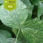 Kweekzakjes tegen spint | Soni-mite
