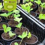 Aaltjes tegen rouwvliegjes | Stenema