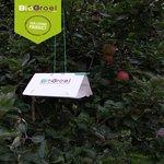 Deltaval Fruitmot | Fruitmotval | Incl 2 feromonen