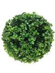 Ilex crenata Dark green® spiraal 90-100 cm