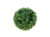 Ilex crenata Dark green bol bovenaanzicht