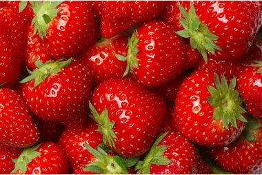 Fragaria Elsanta 'aardbei' - BIO fruitplant