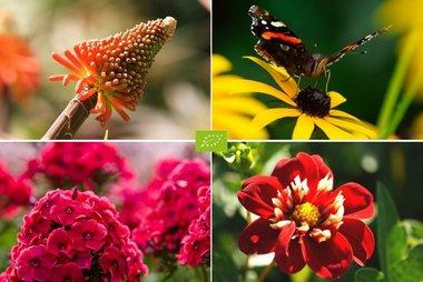 Bijenbuffet Jamaica  - 40 bio bloembollen