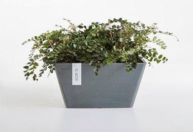 Ecopots Berlin 40 cm - bloemen/plantenbak