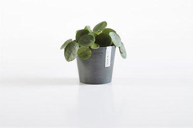 Ecopots Amsterdam mini rond 10,5 cm - planten/bloembak-pot