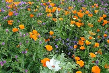 Bloemenmengsel, middelhoog - bio bloemenzaden