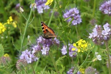 Bloemenmengsel, bijen & vlinders - bio bloemenzaden