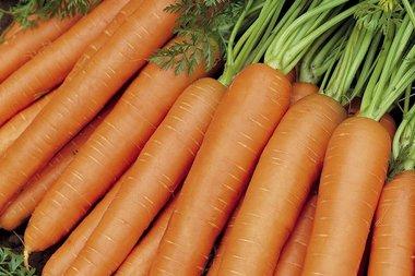 Zomerwortel 'Nantes 2' – Daucus carota - Bio groentezaden