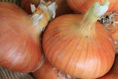 Ui 'Stuttgarter' – Allium cepa - Bio groentezaden