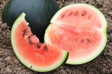 Watermeloen 'Sugar Baby' – Citrullus lanatus - Bio groentezaden