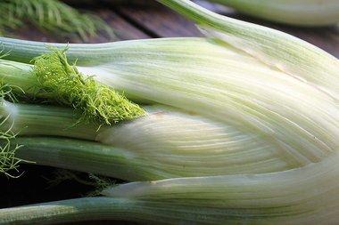 Knolvenkel 'Fino' – Foeniculum vulgare - Bio groentezaden