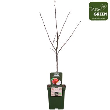 Malus d. 'Rode Boskoop' - Boskoop appel - Bio fruitboom
