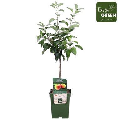 Malus d. 'Jonagold' - Jonagold appel - Bio fruitboom