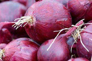 Ui 'red baron' – Allium cepa - Bio groentezaden