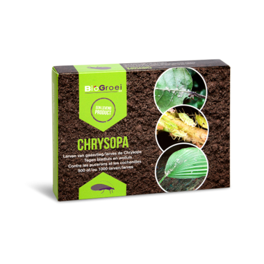 Larven van gaasvlieg | Chrysopa
