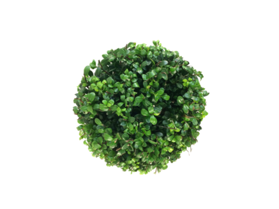 Ilex crenata Dark green® bolvorm 25/30 cm
